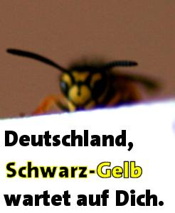 090927_schwarzgelb-wartet